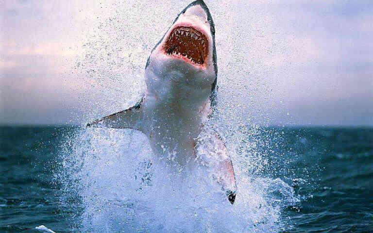 Фото большой акулы
